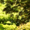 神代植物公園へ行く(かえで園ほか)
